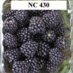 NC-430-Blackberry