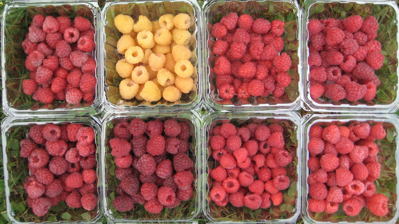 raspberry varieties